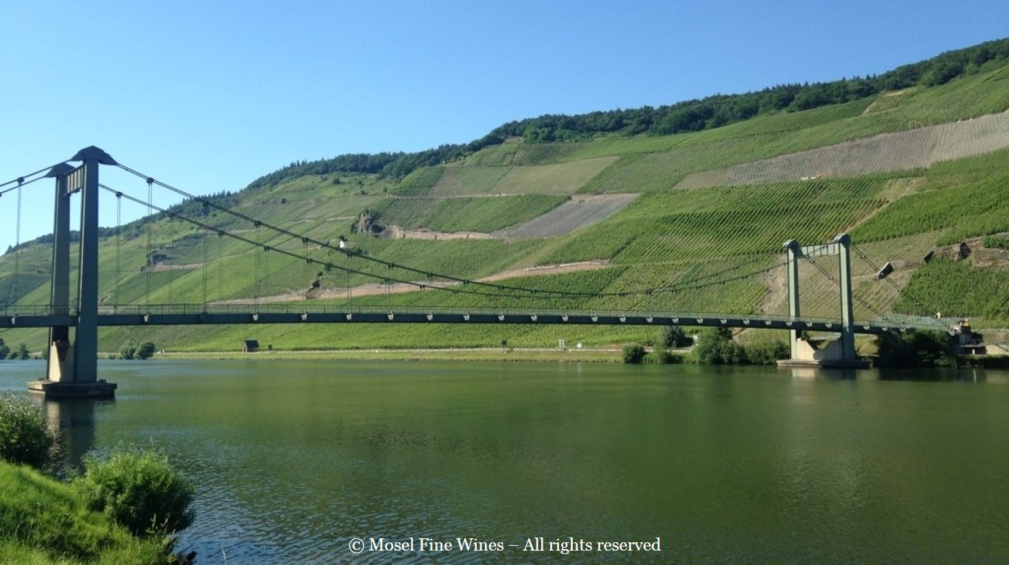 Wehlener Sonnenuhr | Vineyard View | Picture