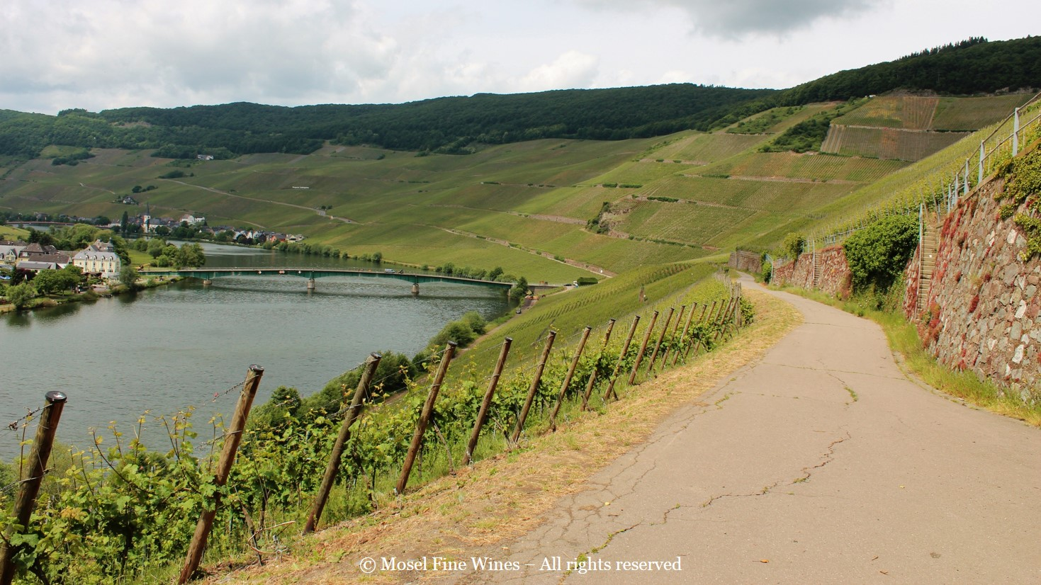 Piesporter Vineyards | Overview