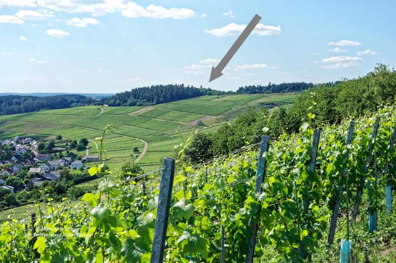 Niedermenniger Herrenberg | Vineyard | Weinberg | Terroir | Picture | Bild
