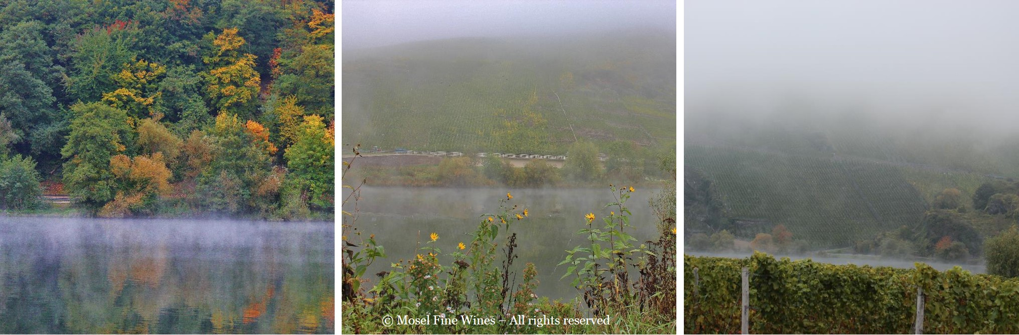 Mosel Harvest - Views of the River