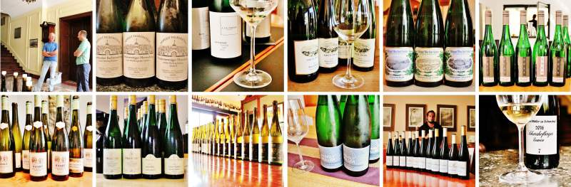 2016 Vintage Report | Mosel | Riesling | Wine | Picture