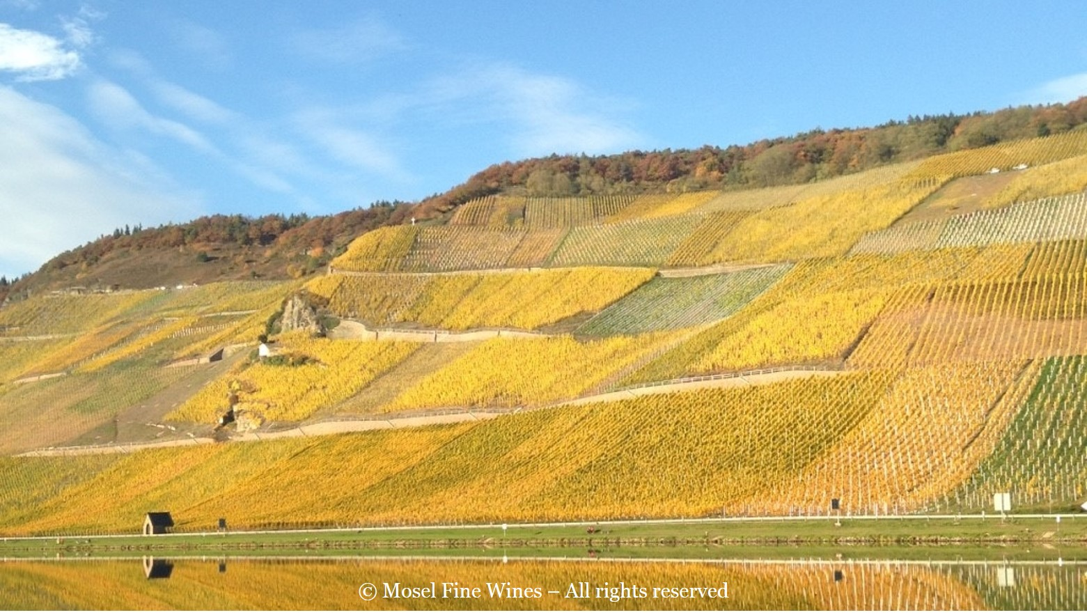 Wehlener Sonnenuhr | Vineyard Picture